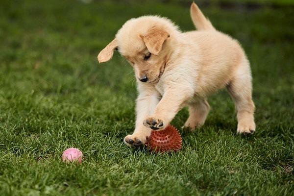 Nằm mơ thấy chó đuổi báo điềm gì | Giải mã giấc mơ bị chó rượt đuổi nên đánh con gì?