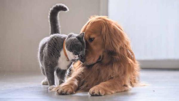Nằm mơ thấy chó mèo cắn nhau đánh con gì?