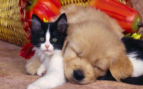 Nằm mơ thấy chó và mèo con là hên hay xui?