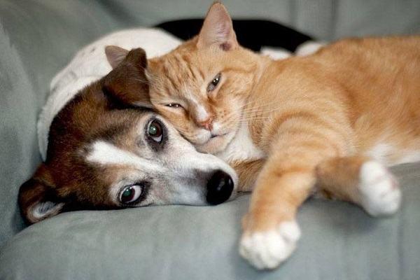 Nằm mơ thấy chó mèo đánh con gì | Giải mã giấc mơ thấy chó và mèo tốt hay xấu?