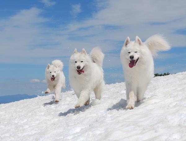 Nằm mơ thấy 3 con chó có ý nghĩa gì?
