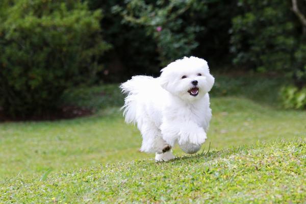 Nằm mơ thấy chó trắng cắn đánh con gì?