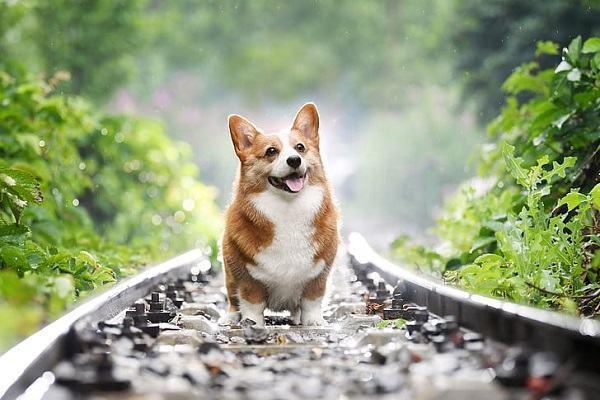 Nằm mơ thấy chó vào nhà là điềm gì | Giải mã giấc mơ thấy chó đi vào nhà nên đánh con gì?