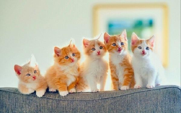 Giải mã giấc mơ thấy mèo con là điềm gì?