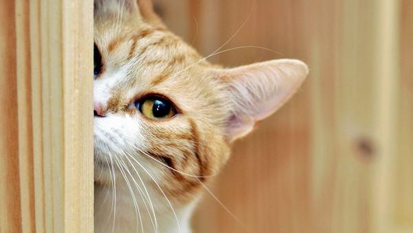 Ngủ mơ thấy cho mèo ăn hoặc nuôi 1 con mèo con