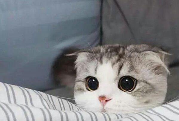 Nằm mơ thấy mèo con đánh con gì?