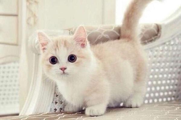 Nằm Mơ Thấy Mèo Con Đánh Con Gì | Giải Mã Giấc Mơ Thấy Rất Nhiều Mèo Con Là Điềm Gì?