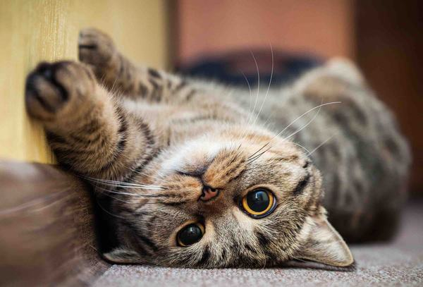 Giải mã giấc mơ thấy mèo báo điềm gì?