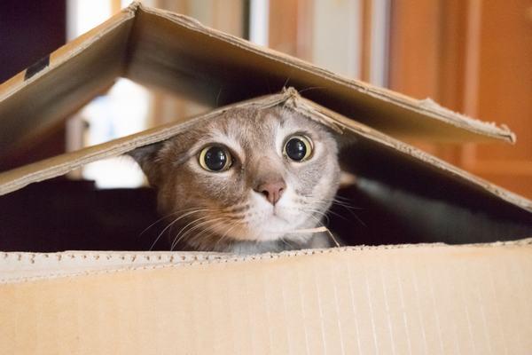 Nằm mơ thấy mèo đánh con gì, số mấy chính xác nhất?