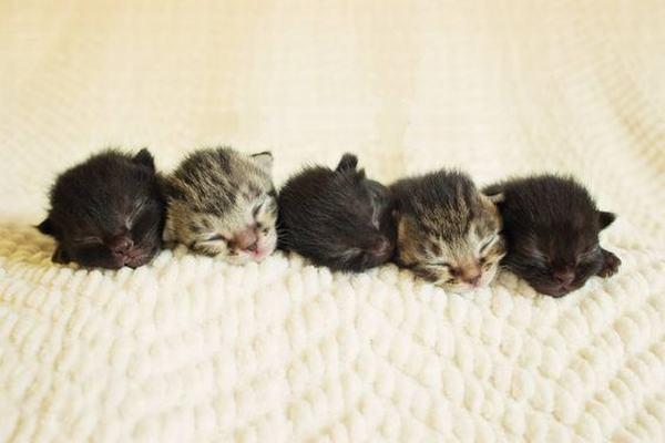 Nằm mơ thấy rất nhiều mèo con, một bầy mèo con?