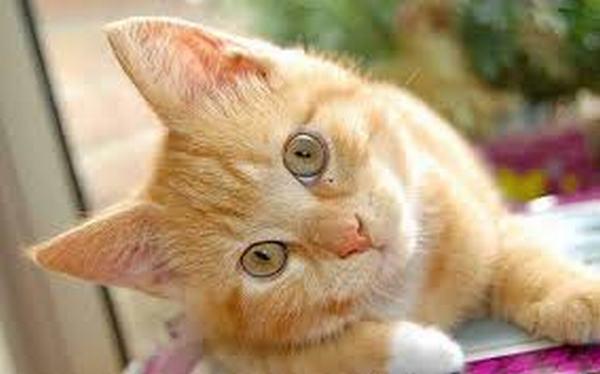 Ngủ mơ về con mèo màu cam là hên hay xui?