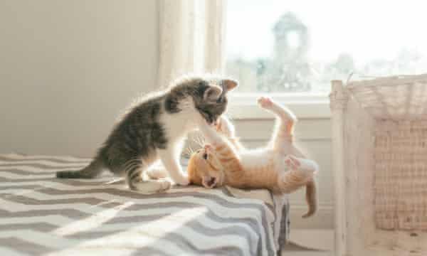 Mơ thấy mèo leo trèo có ý nghĩa gì?