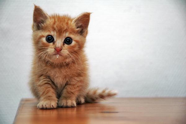 Nằm mơ thấy Mèo kêu meo meo là hên hay xui?