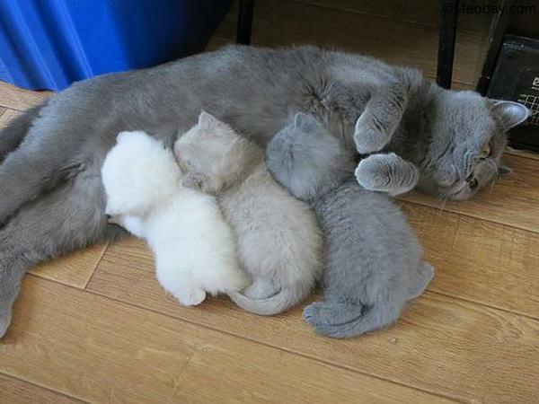 Nằm mơ thấy mèo con mới đẻ
