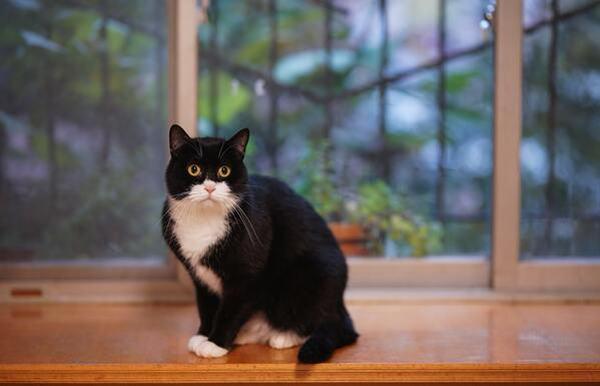 Nằm mơ thấy mèo đen đang cào, tấn công bạn