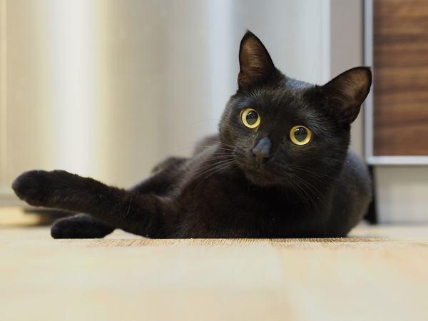 Nằm mơ thấy mèo đen biến thành một con chó con