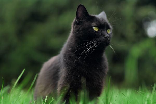Ngủ mơ bán mèo đen điềm lành hay dữ?