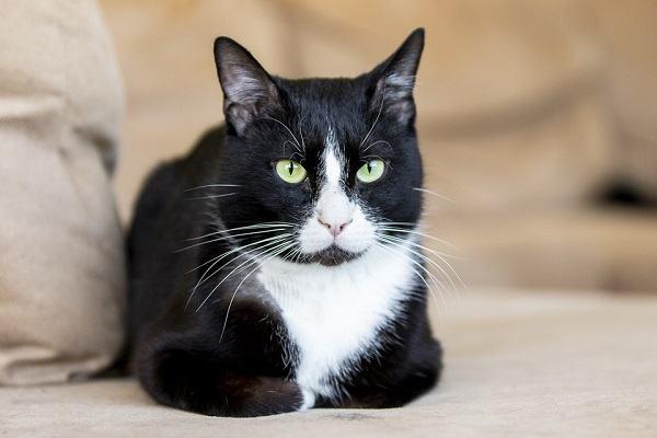 Nằm mơ thấy mèo đen đánh con gì, số mấy chính xác?