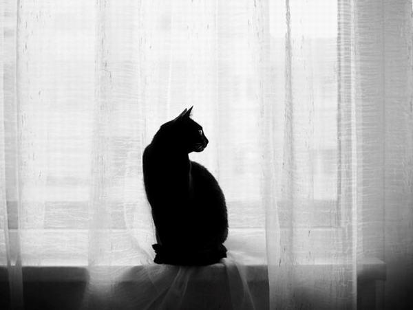 Mèo đen được nhiều người gọi là mèo mun hay linh miêu