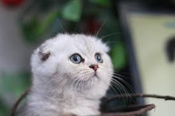 Nằm mơ thấy bị mèo trắng cắn