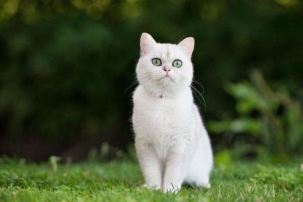 Nằm Mơ Thấy Mèo Trắng Đánh Con Gì | Giải Mã Giấc Mơ Thấy Mèo Màu Trắng Là Điềm Gì?
