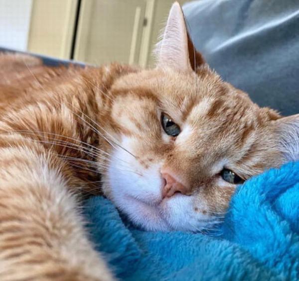Ngủ mơ thấy mèo vàng bò lên người khi đang ngủ