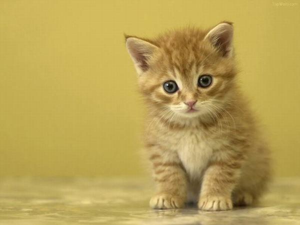 Ngủ mơ thấy nhặt được mèo vàng