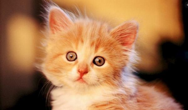 Các trường hợp cụ thể khi mơ thấy mèo vàng