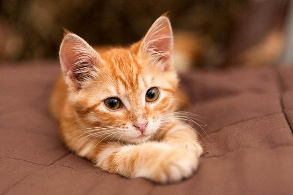 Nằm Mơ Thấy Mèo Vàng Đánh Con Gì | Giải Mã Giấc Mơ Thấy Con Mèo Màu Vàng