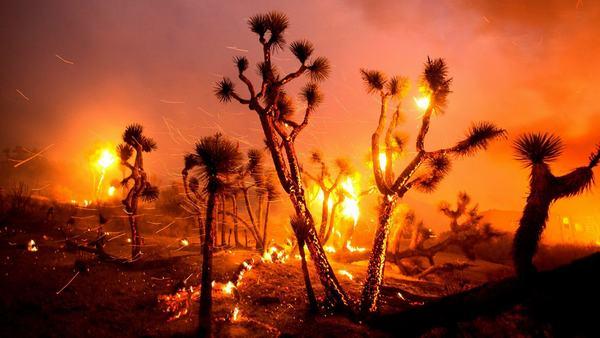 Nằm mơ thấy lửa cháy đánh đề con gì trúng đậm?
