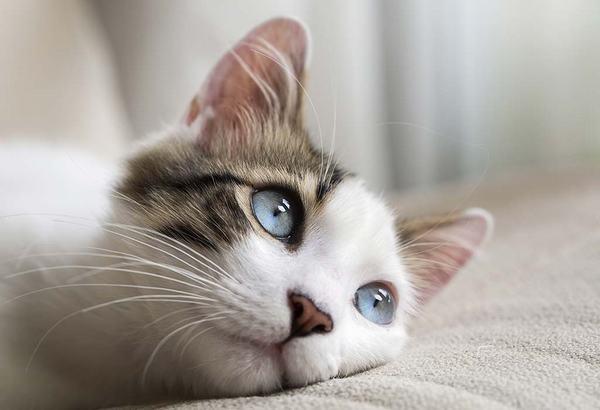 Mèo hàng xóm vào nhà mình