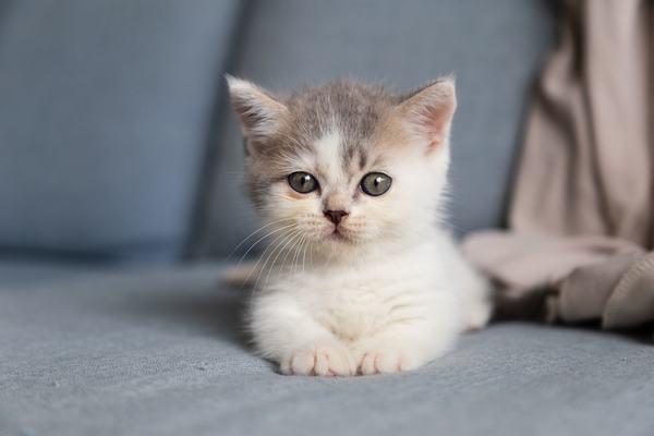 Mèo vào nhà đánh con gì, số mấy?