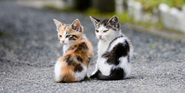 Tuy nhiên, tại một số quốc gia, mèo là biểu tượng của sự may mắn