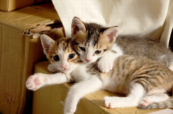 Tuy nhiên, mèo trắng hay mèo đen cũng bị giáo hội cho là xui xẻo và không nên nhìn thấy chúng.