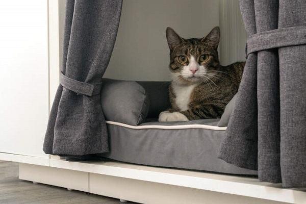 Mèo Vào Nhà Hên Hay Xui, Là Điềm Báo Tốt Hay Xấu | Mèo Vào Nhà Đánh Con Gì
