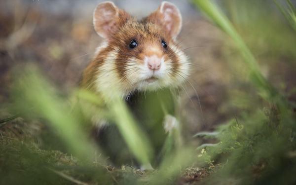 Nằm mơ thấy chuột cắn chảy máu