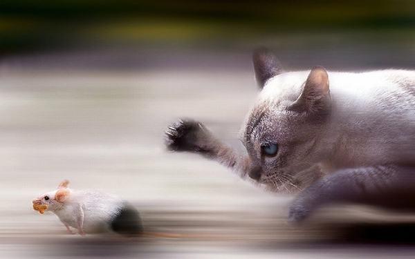 Ngủ mơ thấy mèo đuổi chuột
