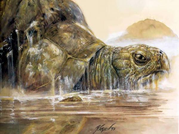 Nằm mơ thấy rùa vàng là điềm lành hay dữ?