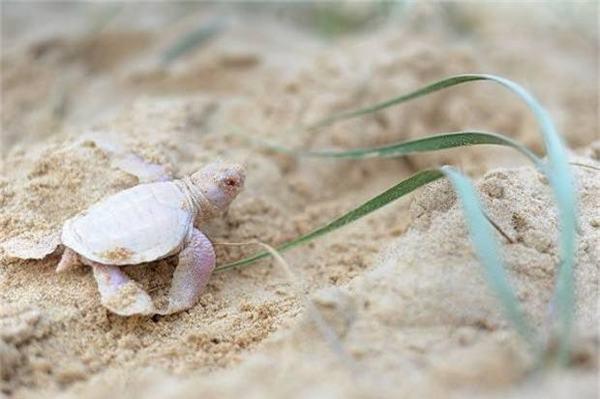 Nằm mơ thấy rùa trắng