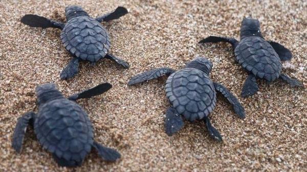 Chiêm bao mơ thấy rùa chết?