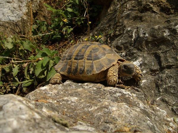 Nằm mơ thấy rùa đá