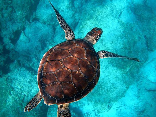 Nằm mơ thấy rùa đánh con gì số mấy chính xác?