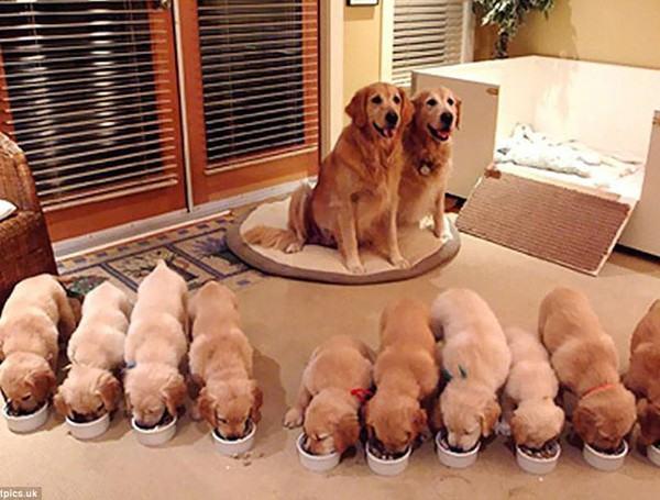 Giấc mơ thấy đàn chó con là số mấy? đánh con gì?