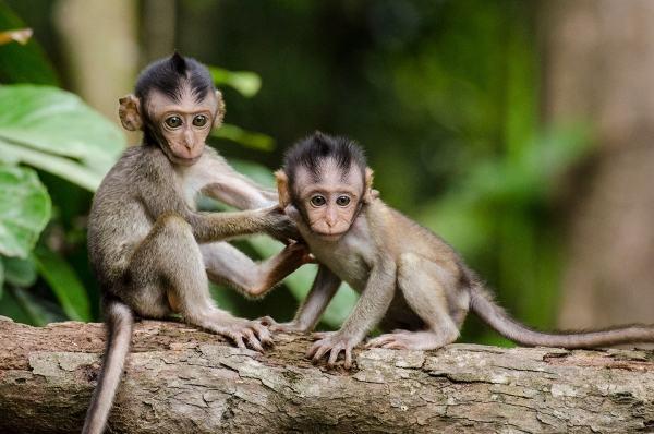 Ngủ nằm mơ thấy khỉ chết hoặc bị giết có ý gì?