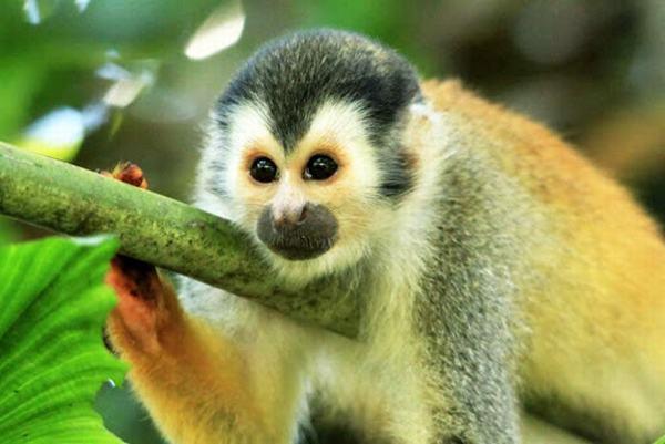Mộng thấy mình bị khỉ cắn có điềm gì?