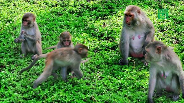 Ngủ mơ thấy mình bị 1 đàn khỉ bao vây