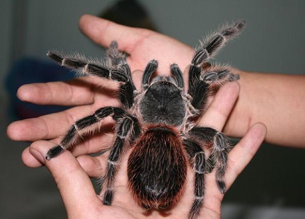 Nằm chiêm bao thấy nhện từ trên trần nhà rơi trúng người.