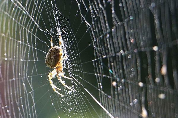 Xem giải mã giấc mơ thấy nhện vào nhà