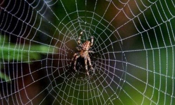 Ngủ nằm mơ thấy mạng nhện