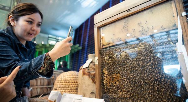 Nằm mơ thấy mình đang nuôi ong